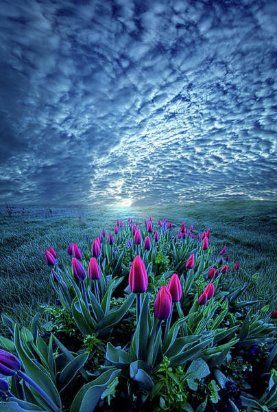 Photograph - Unequal To Our Gifts by Phil Koch