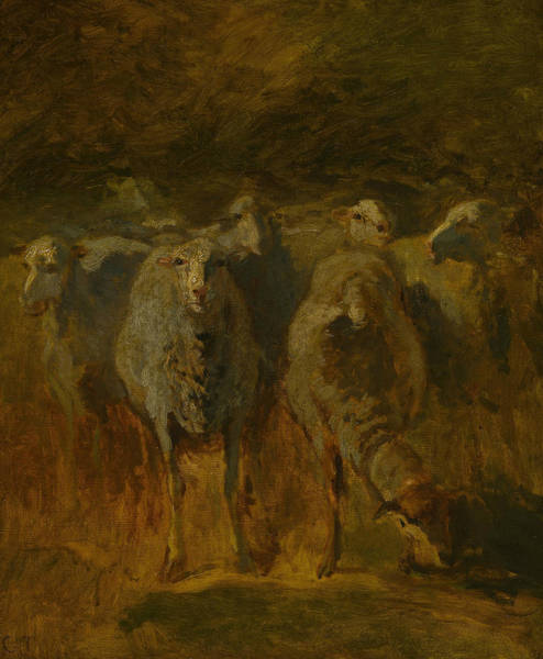 Painting - Unfinished Study Of Sheep by Constant Troyon