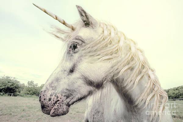 Unicorn Photography Realistic Art Print