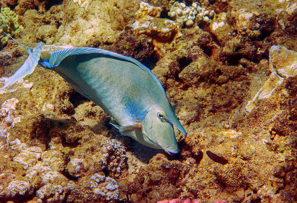 Photograph - Unicorn Tang by Anthony Jones