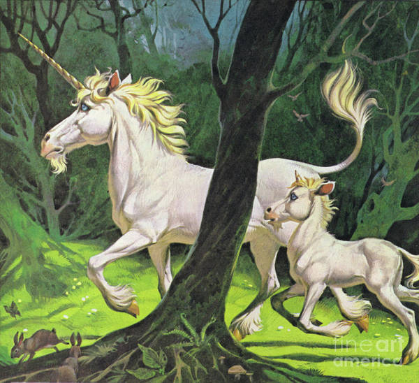 Wall Art - Painting - Unicorns by Angus McBride