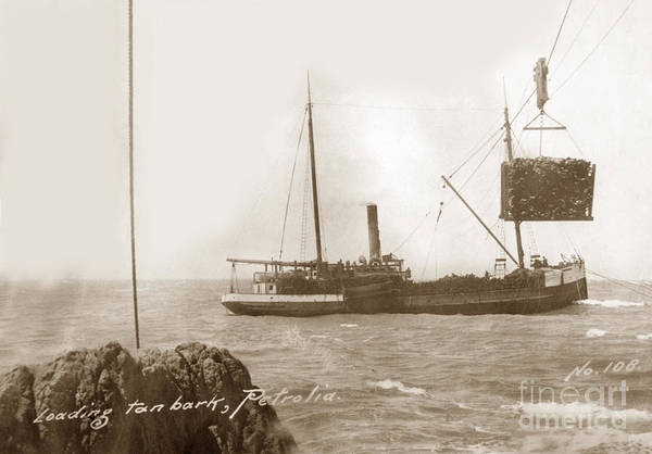 Photograph - Unidentified S. S. Ship Loading Tan Bark, From Mattole Valley, Petrolia by California Views Archives Mr Pat Hathaway Archives