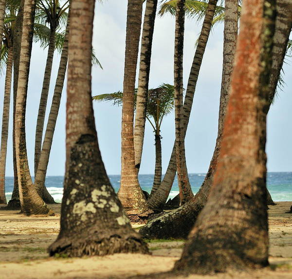 Panama Photograph - Uninhabited Paradise by Mr. P De Panama
