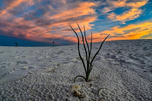 Photograph - Unique Perspective Of A Sunset At White Sands, New Mexico  by Chance Kafka