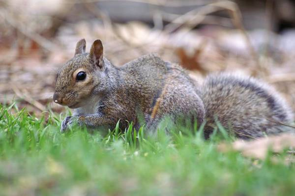 Photograph - Unique Striped Squirrel by Don Northup