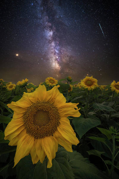 Wall Art - Photograph - Universally Speaking  by Aaron J Groen