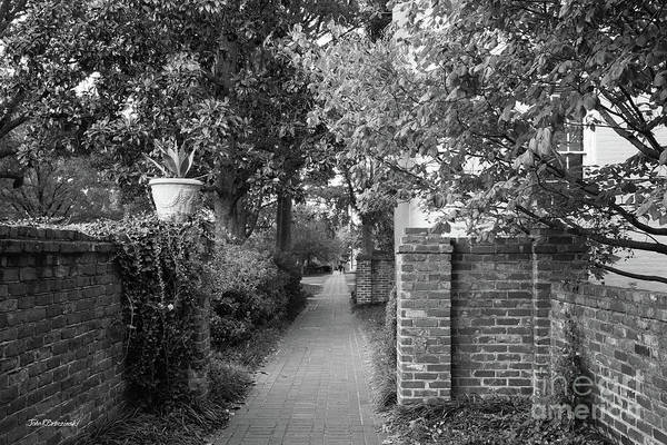 Photograph - University Of South Carolina Landscaped Walkway by University Icons