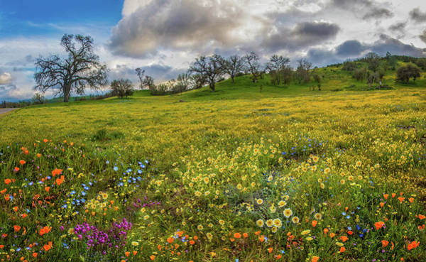 Photograph - Unparalleled Beauty At Shell Creek - Superbloom 2019 by Lynn Bauer