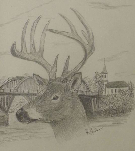 White Tailed Deer Drawing - Untitled by Randy Maske