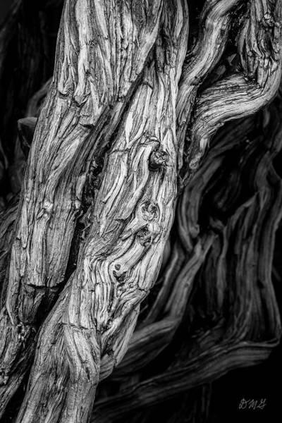 Photograph - Untitled Viii Bw by David Gordon