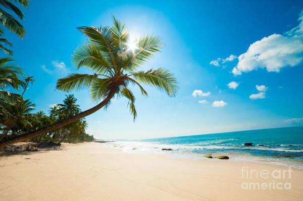 Tropical Plants Photograph - Untouched Tropical Beach In Sri Lanka by Anton Gvozdikov
