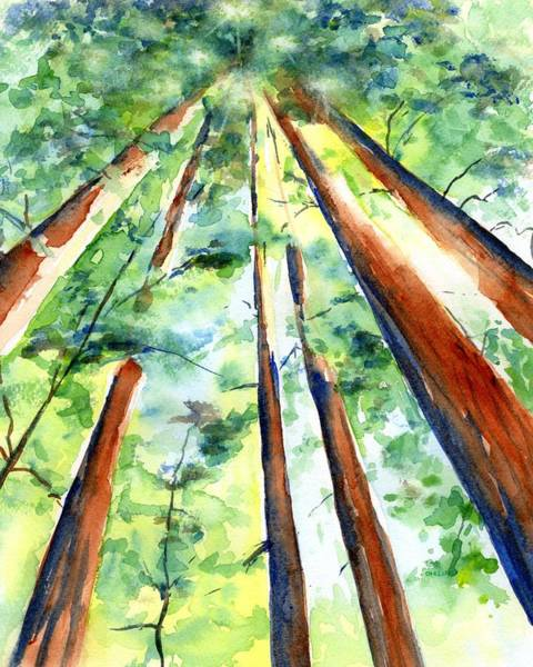 Wall Art - Painting - Up Through The Redwoods by Carlin Blahnik CarlinArtWatercolor