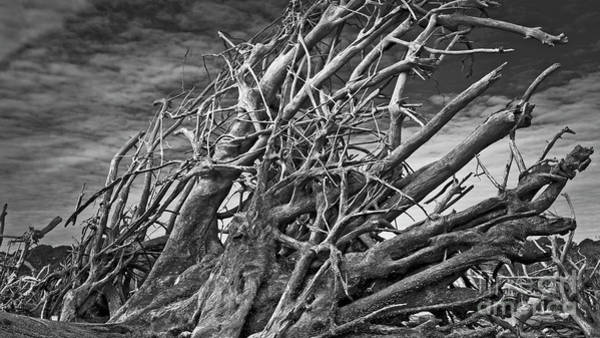 Photograph - Uprooted by Patrick M Lynch