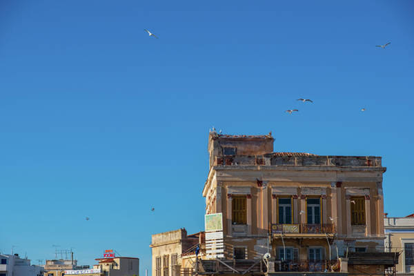 Photograph - Urban Avian Flights by Iordanis Pallikaras