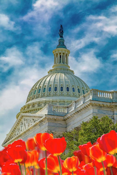 Us Capitol Photograph - Us Capitol Tulips Take The Stage by Betsy Knapp