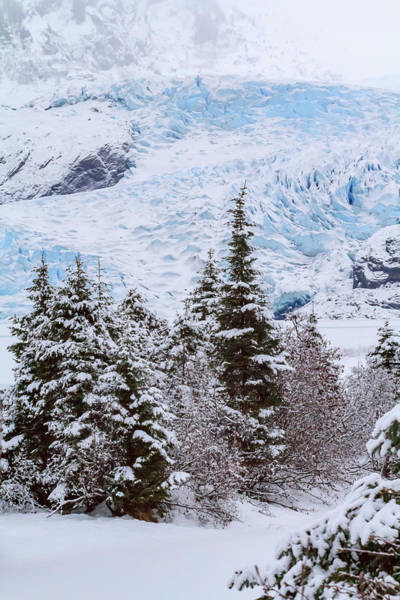 Wall Art - Photograph - Usa, Alaska Mendenhall Glacier Emerges by Margaret Gaines