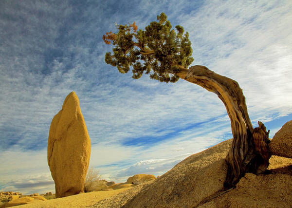Wall Art - Photograph - Usa, California, Joshua Tree National by Charles Gurche