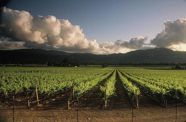 Napa Valley Photograph - Usa, California, Napa Valley, Vineyard by Jerry Alexander
