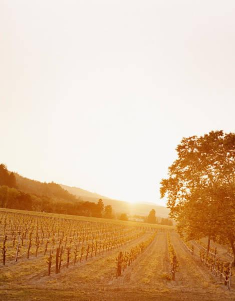 Napa Valley Photograph - Usa, California, Napa Valley, Vineyard by Kate Powers