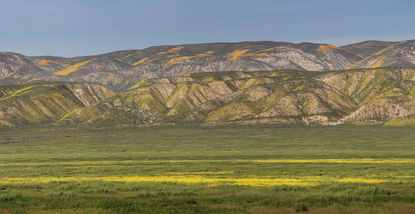 Wall Art - Photograph - Usa, California Yellow Wildflowers by Jaynes Gallery