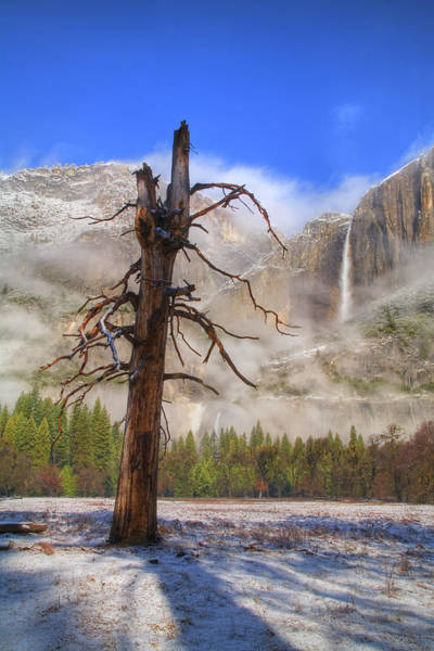 Wall Art - Photograph - Usa, California, Yosemite Np, Dead Tree by Jeff Hunter