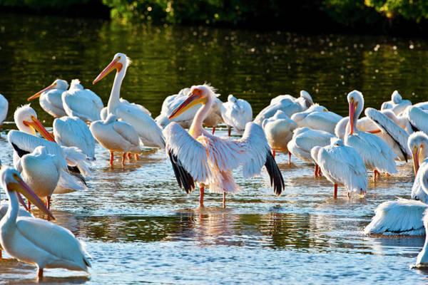 Ding Photograph - Usa, Florida, Fort Meyers, Sanibel by Bernard Friel