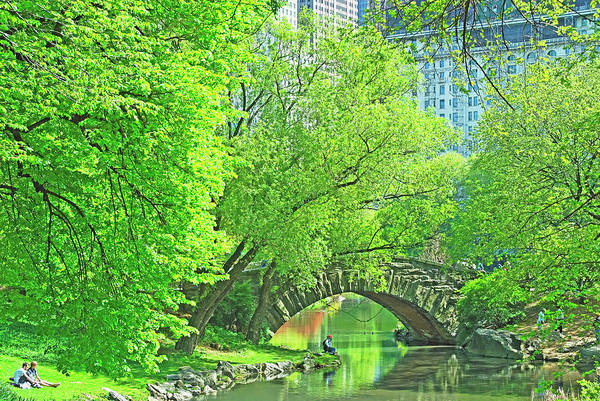 Wall Art - Photograph - Usa, New York, Central Park, Trees by Mitchell Funk