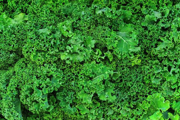 Kale Photograph - Usa, New York City, Fresh Kale by Tetra Images