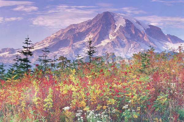 Usa, Washington, Mount Rainier National Art Print
