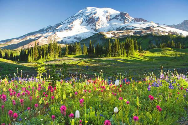 Usa, Washington, Mt. Rainier National Art Print