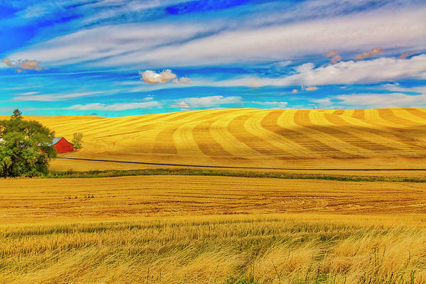 Wall Art - Photograph - Usa, Washington State, Pullman by Jaynes Gallery