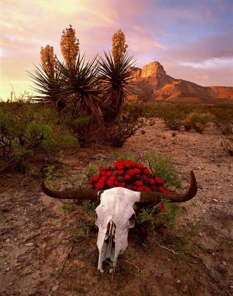 Wall Art - Photograph - Usa,texas,guadalupe Mtns.nat. Park by Kerrick James Photog