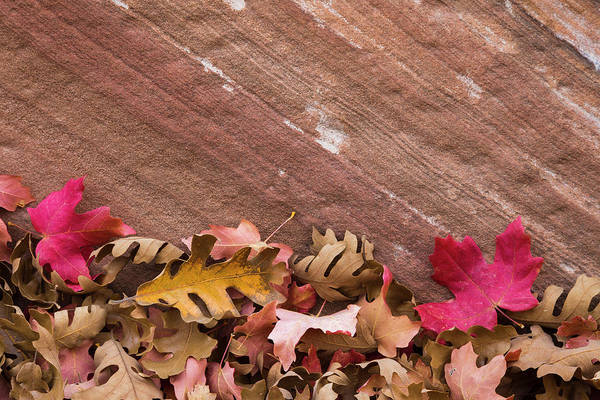 Wall Art - Photograph - Utah, Autumn Leaves Piled by Brenda Tharp