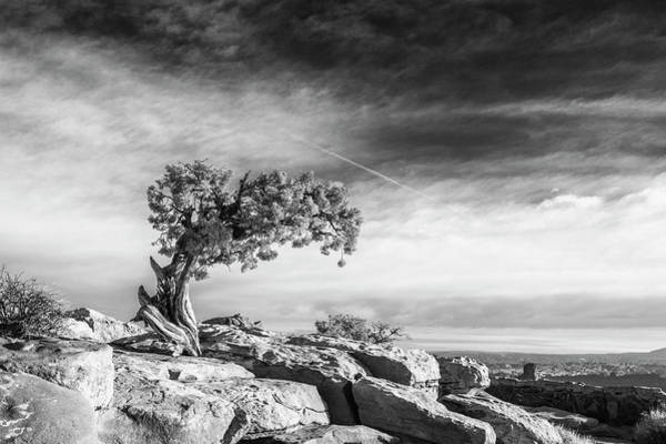 Wall Art - Photograph - Utah Juniper Black And White Print by Stephanie McDowell