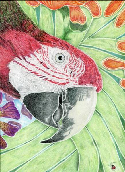Green Parrot Drawing - Utopia by Pandora Christy