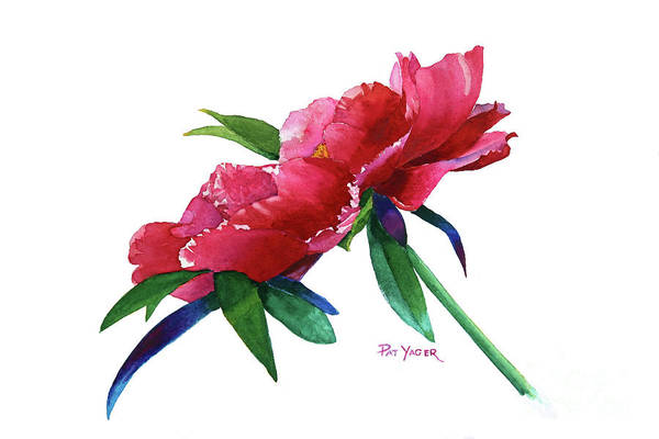 Wall Art - Painting - Vancouver Peony by Pat Yager