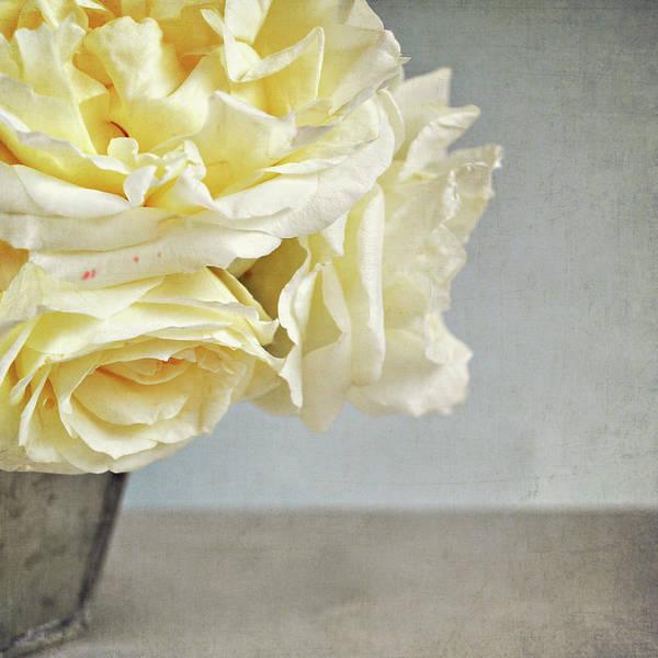 Randle Photograph - Vanilla Roses by Photo - Lyn Randle