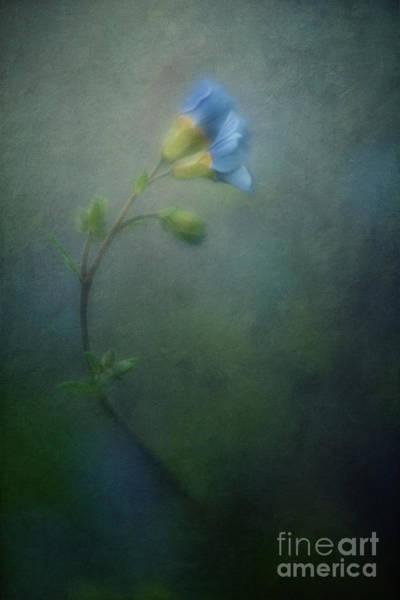 Wall Art - Photograph - Vanishing by Priska Wettstein