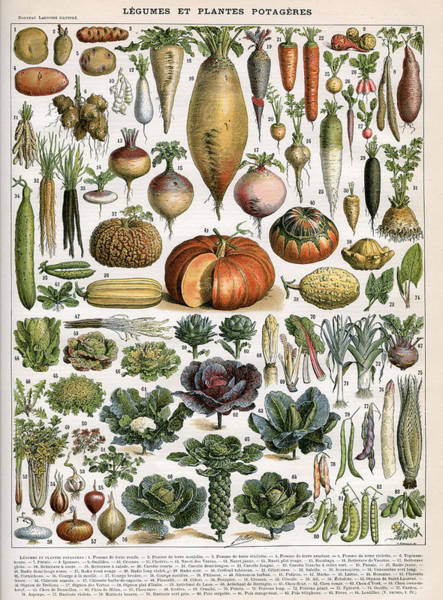 Freshness Digital Art - Varieties Of Vegetables by Graphicaartis