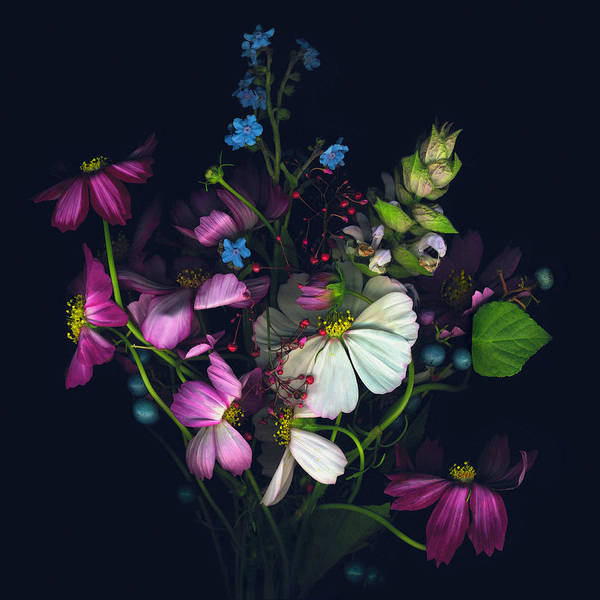 Wall Art - Photograph - Variety Of Flowers Against Black by John Grant