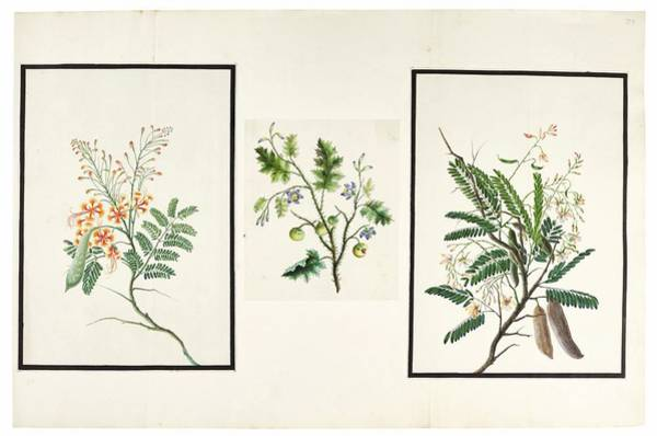 Wall Art - Painting - Various Flowers, India, Murshidabad, Company School by Celestial Images