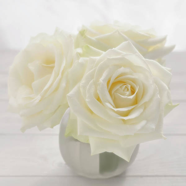 Photograph - Vase With Tree White Roses On A Sunny by Cora Niele