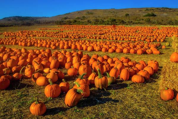 Wall Art - Photograph - Vast Field Of Pumpkins by Garry Gay