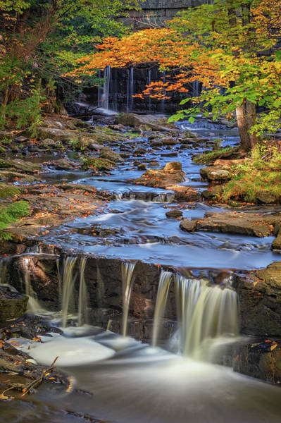 Photograph - Vaughan Woods In Autumn by Kristen Wilkinson