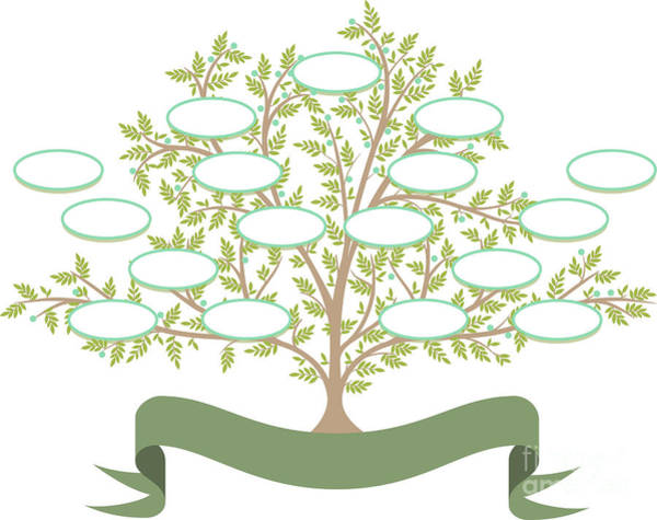 Wall Art - Digital Art - Vector Family Tree With Blank Spaces To by Tomacco