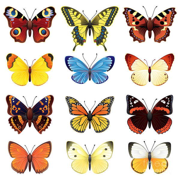 Wall Art - Digital Art - Vector Illustration - Butterfly Icon Set by Jut