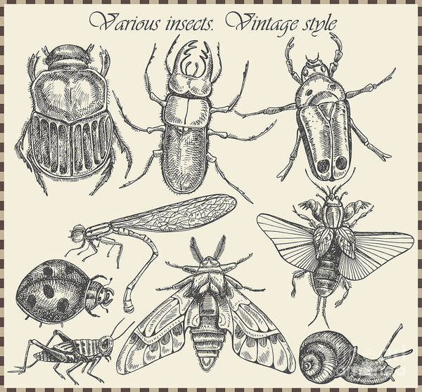 Engraved Digital Art - Vector Set Insects In Vintage Style by Horg