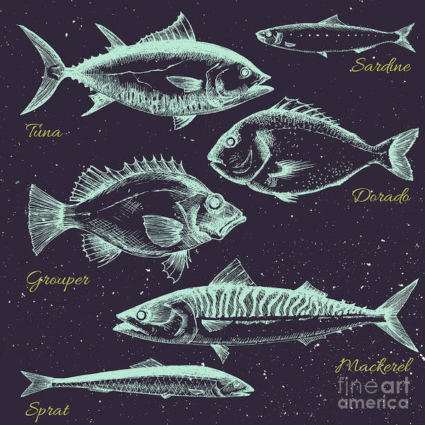 Stylized Wall Art - Digital Art - Vector Set Of Sea Fish Menu, Shrimp by Anastasia Lembrik