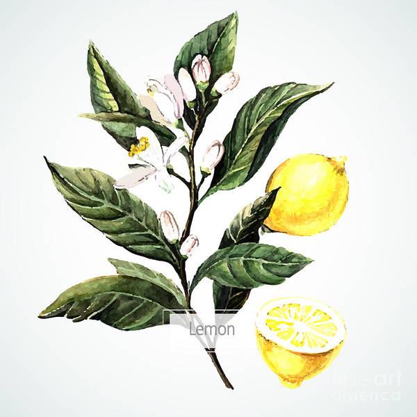 Wall Art - Digital Art - Vector Watecolor Lemon. Botanical by Yudina Anna
