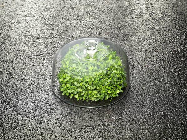 Tray Photograph - Vegetation Under Glassbowl by Holloway